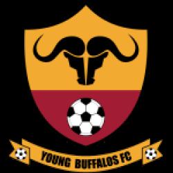 Young Buffaloes